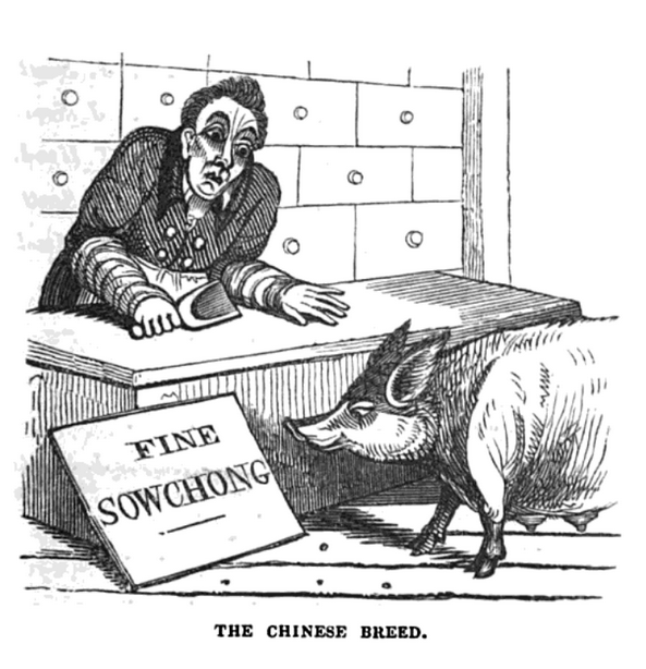 com an 1839 the chinese breed