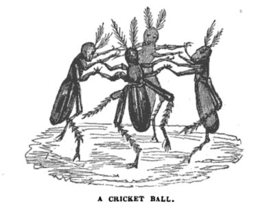 com an 1838 j scott a cricket ball