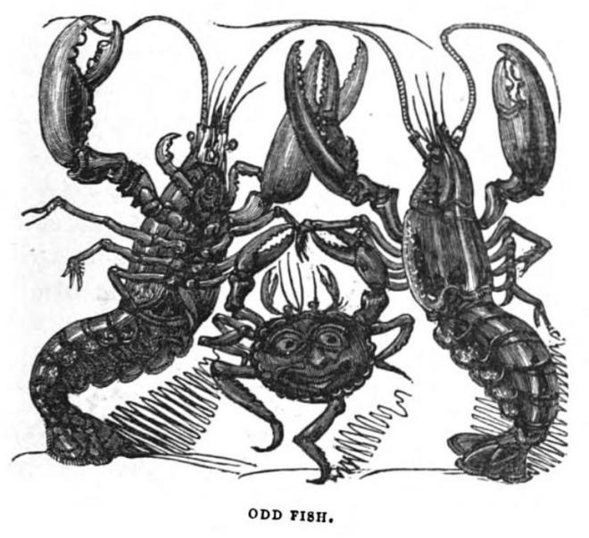 w-h-brooke-the-humorist-harrison-1832-odd-fish